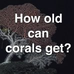 How Old Can Corals Get?