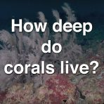 How Deep Do Corals Live?