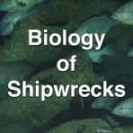 Biology of Shipwrecks from the Battle of the Atlantic