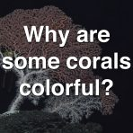 Why Are Some Corals Colorful?